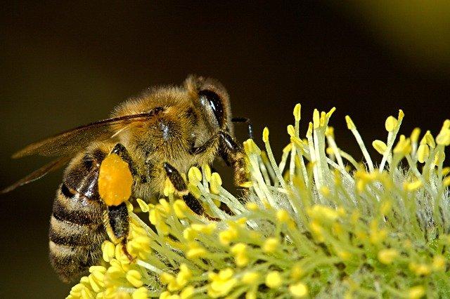 včela na květině.jpg